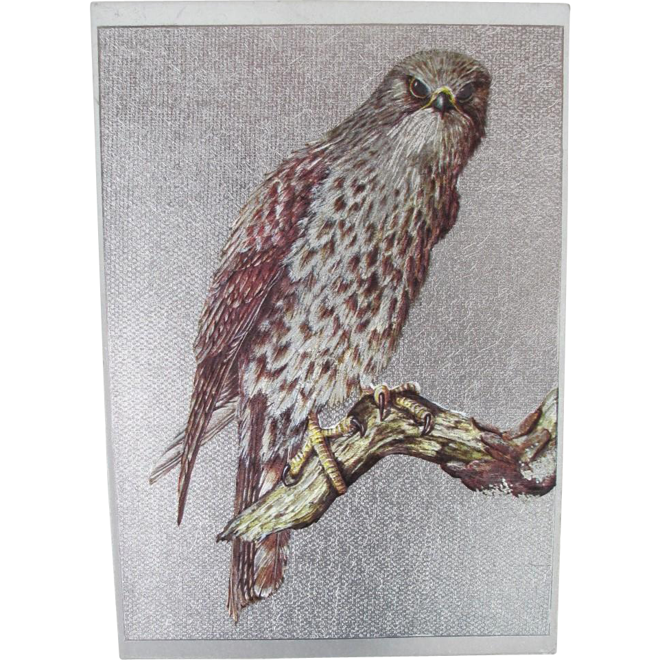 Foil Falcon Postcard from England