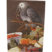 African Grey with Fruit Postcard from England