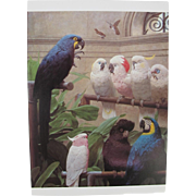 Select Comittee Postcard from England with Macaws and Cockatoos