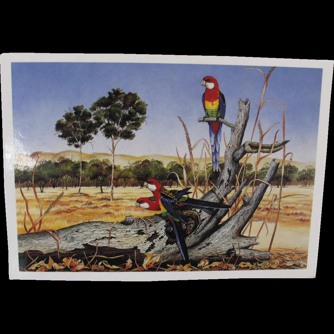 Vintage Rosellas Parrot Postcard from Australia