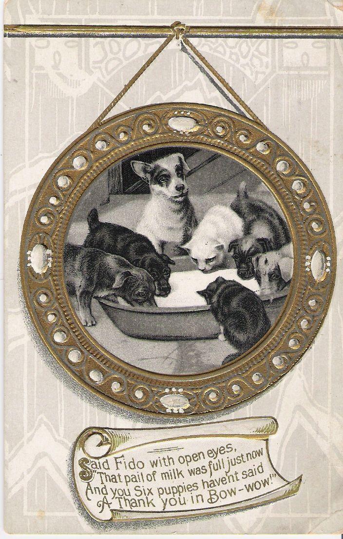 """""""Puppies & Kittens"""" - #681/5"""