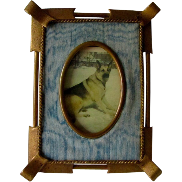 Victorian Frame German Shepherd Dog Photo