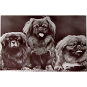 Vintage Ink Blotter With Pekingese Dogs Unused