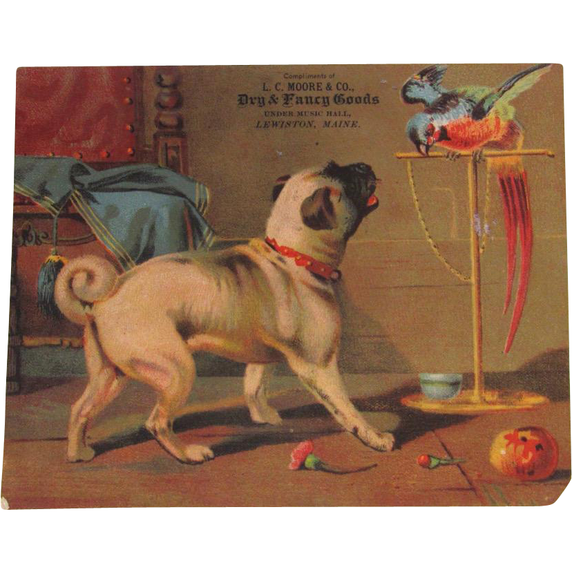 Early Trade Card Print Pug Dog 5 x 6 Inches