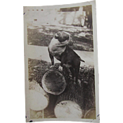 Nice Antique Photograph of English Bulldog