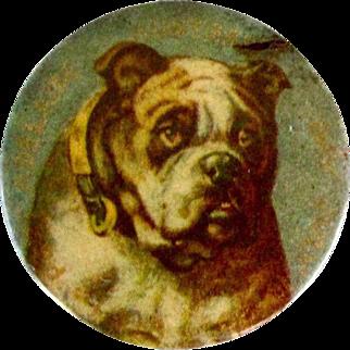WWI 1918 Australia Bulldog Pin Back Celluloid
