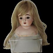 Large Kestner Shoulder Head, Small Faint Hairline