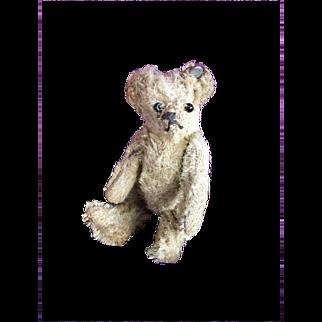 Adorable Miniature Steiff Teddy Bear with Button