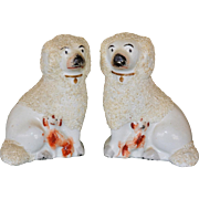 C1850 Rare Antique Poodle/Spaniel Staffordshire Dog Pair