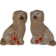 C1850 Antique Staffordshire Dogs ~ Poodles with Spaniel Pups