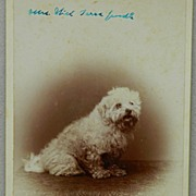 Antique Cabinet Dog Photograph