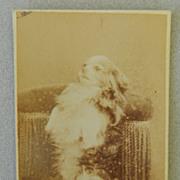 Antique Cartes-De-Visites Dog Photograph