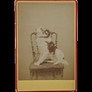 Cabinet Photograph ~ Posing Dog #2
