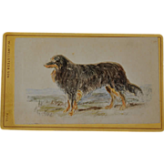 Antique Hand Colored CDV Dog Photograph