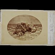 Antique Cabinet Photograph ~ Old Sleepy Dog