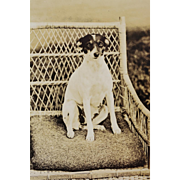 Antique RPPC Dog Postcard