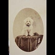 Antique CDV Photograph ~ Precious Dog