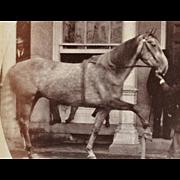 Antique Cabinet Photograph ~ Trick Horse