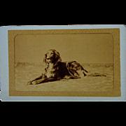 Antique French Dog CDV Photograph