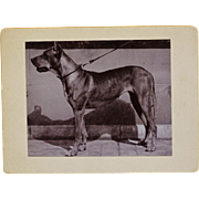 "Antique Dog Photograph ~ Mastiff Named ""Lola"""
