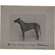 Antique Dog Photograph ~ German Mastiff C1899