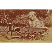 Antique CDV Dog Photograph ~ Sweet Terrier In Cart