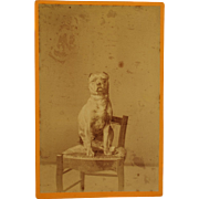 Antique Cabinet Dog Photograph ~ French Pit Bull Terrier