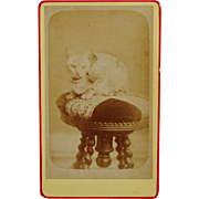 Antique French Cat CDV Photograph ~ Cute Kitty