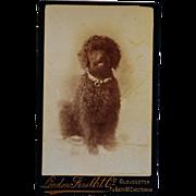 Antique CDV Dog Photograph ~ Black Poodle - Red Tag Sale Item