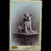 Antique CDV Dog Photograph