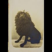Antique CDV Dog Photograph ~ Black French Poodle