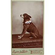 Antique CDV Dog Photograph ~ Terrier With Bow