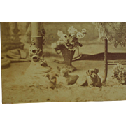 C1895 Antique Cabinet Photograph ~ Three Lovely Little Dogs