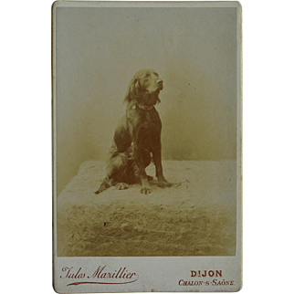 Antique French Cabinet Dog Photograph