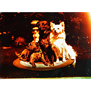 Antique French Glass Photograph Negative Of Three Dogs
