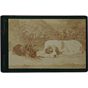 Antique Cabinet Photograph ~ Pair Of Dogs
