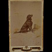 Antique French Cabinet Photograph ~ Attentive Retriever Dog