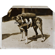 "Pre WW2 Parachute Rescue Dog ""Maggie Jiggs"" Press Photograph"