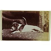 Antique Australian CDV Photograph ~ Jack Russell Dog