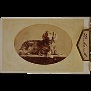 "Antique CDV Photograph ~ A Dog Named ""Hubert"""