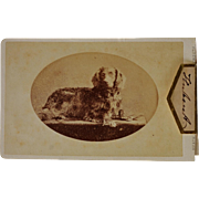 "Antique CDV Photograph ~ A Dog Named ""Hubert"""