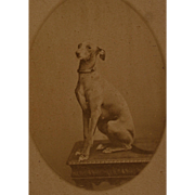 Antique French CDV Photograph ~ Greyhound Dog