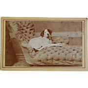 Antique CDV Dog Photograph ~ Recumbent Hound