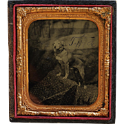 "Antique Tintype Photograph ~ Dog Named ""Tippy"""