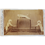 """Antique CDV Photograph ~ """"Prof Hutchinson's Performing Dogs, Punch, Dash, and Toby"""""""