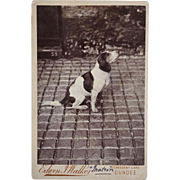Antique Cabinet Photograph ~ Attentive Hound Dog