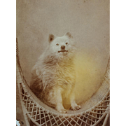 Antique Photograph ~ Spitz Dog On Wicker Chair