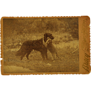 Antique Cabinet Photograph ~ Dog With Raccoon Friend