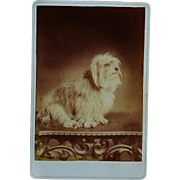 Antique Cabinet Dog Photograph ~ Adorable Terrier