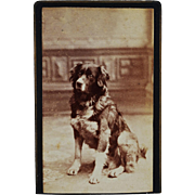 Antique CDV Dog Photograph